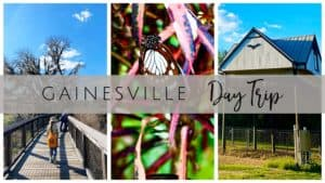 Day Trip to Gainesville, FL - 5 Family Friendly Activities for Kids